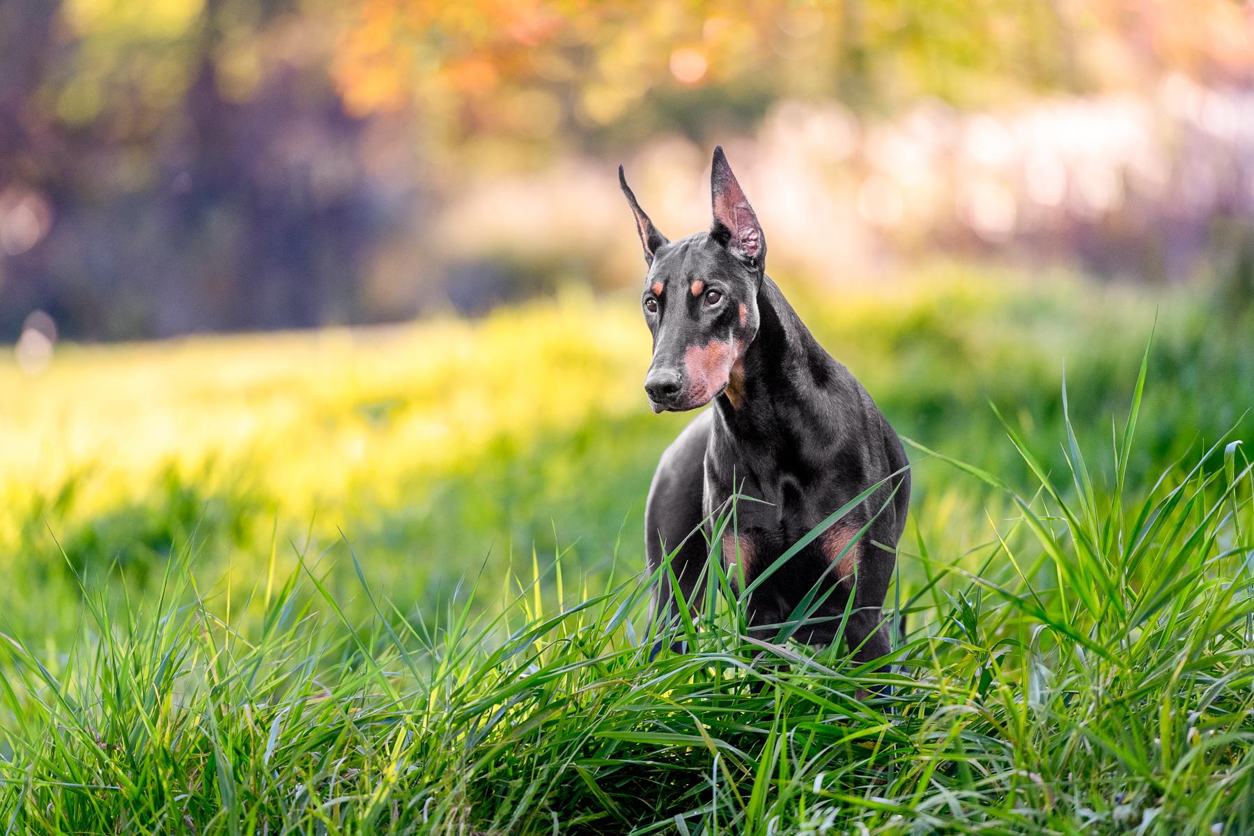 Grand Rapids Pet Photographer Tailwagger Dog Photography